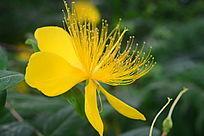 美丽黄色花卉