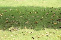 洒满落叶的草地