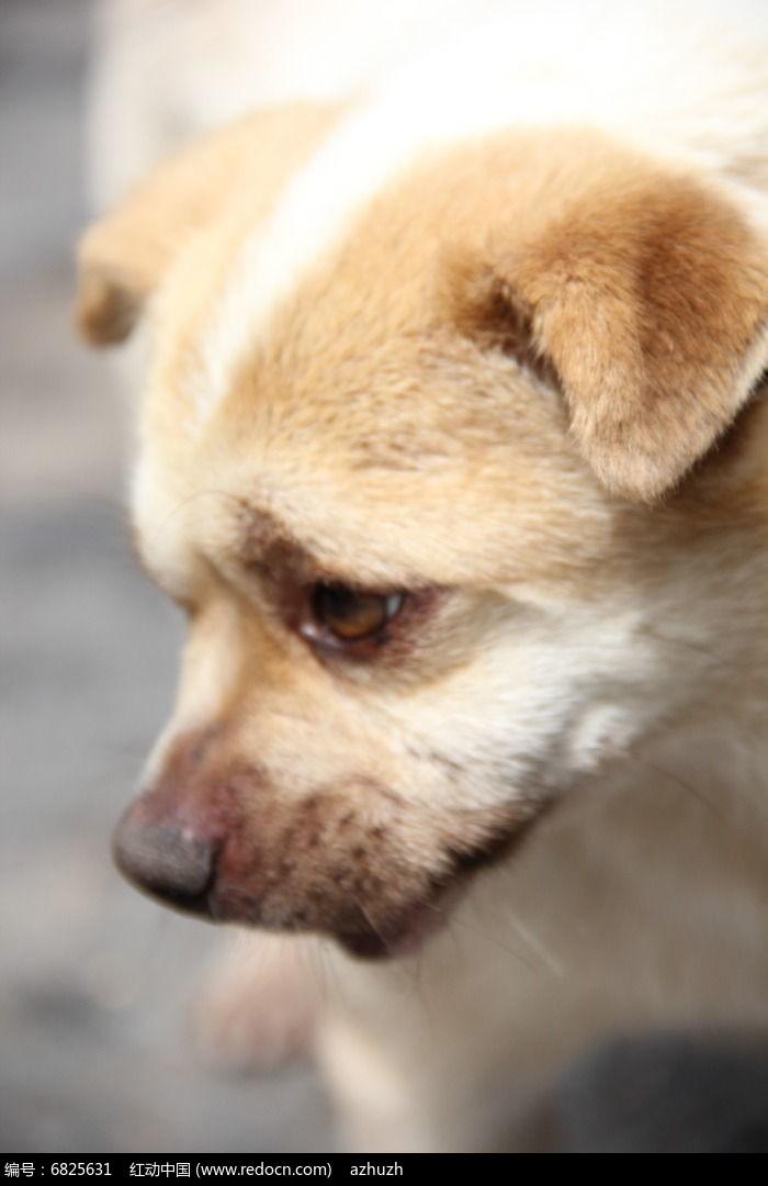 最忧郁的狗_史上最忧伤的狗