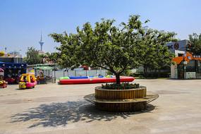 商业街广场上的树木