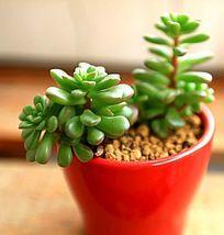 多肉植物小绿植