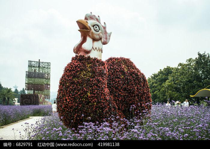 原创摄影图 动物植物 花卉花草 公鸡造型鲜花