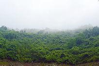 飘满云雾的山峰