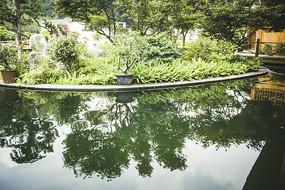 清澈的水面与绿草