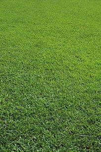 舒服的草地