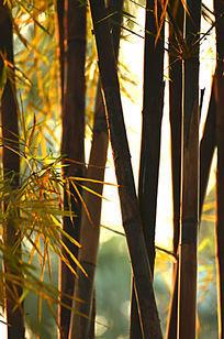 唯美光影竹林风景图片