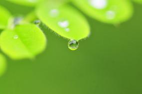 叶片上的水滴