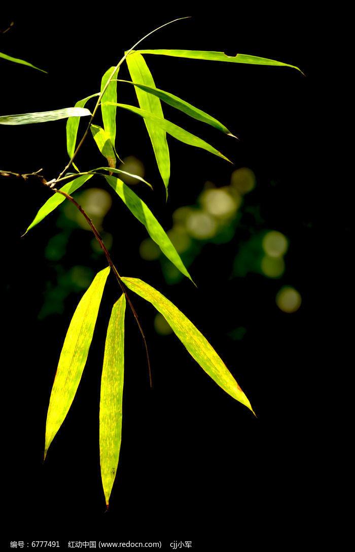 竹子姿态特写竹叶风景图片图片