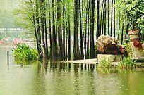 湖畔的小树林风景图片