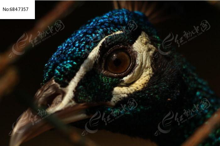 孔雀的眼睛