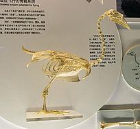 鸟的骨骼系统