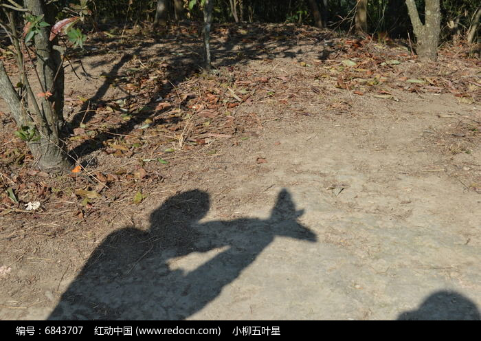 动物影子配对大图