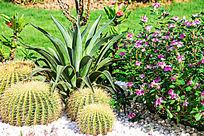 仙人掌花园
