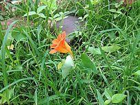 野草中的美丽花朵