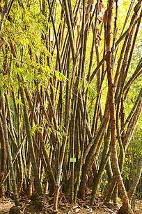 一片竹林风景图片