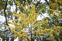 枝头黄灿灿的花朵