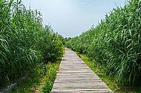 竹子林里的小路