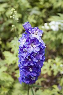 蓝色的一串花束