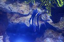 白色斑点条纹鱼