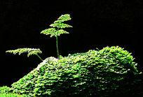 翠绿的青苔图片