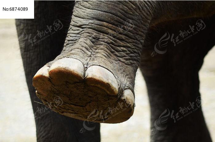 原创摄影图 动物植物 陆地动物 大象脚