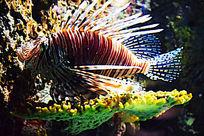 海中 橙色条纹鱼