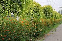 景观树与金盏花