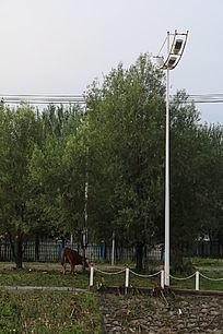 路灯与树下吃草的牛