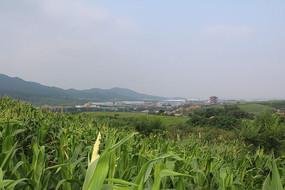 山脉工业园区灵宝寺