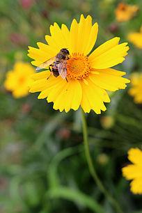 盛开的花朵 与蜜蜂