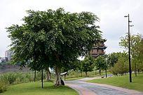 生物世界树木树叶