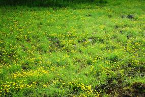湿地水生植物