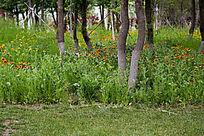 植物园树木花草