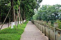 街道两旁槐树枝繁叶茂