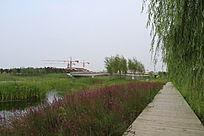 木桥垂柳与桥