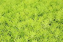 青草绿色背景素材