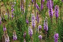 唯美紫花背景图片