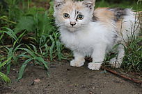 雨后草丛中的小猫