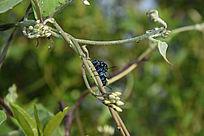草丛中的甲壳虫