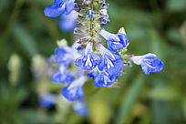 蓝色的花束