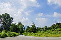 千山皈源寺路边的树木与朵朵白云