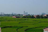 绿油油的乡村田野风景图片