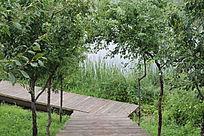 木板桥果树