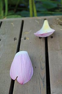木板桥上凋落的荷花花瓣花蕊