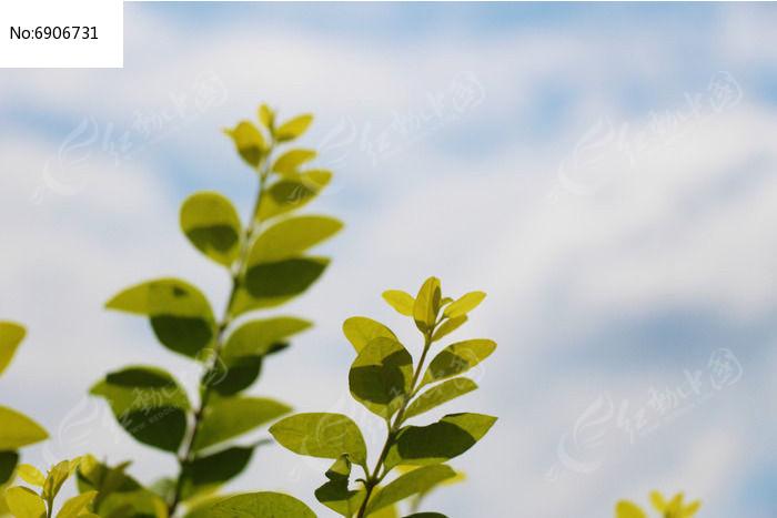 逆光唯美的枝叶图片,高清大图_树木枝叶素材
