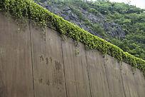 园艺绿曼墙
