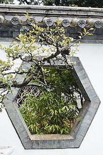 竹子与六边形的窗子