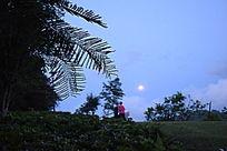 傍晚的美景摄影