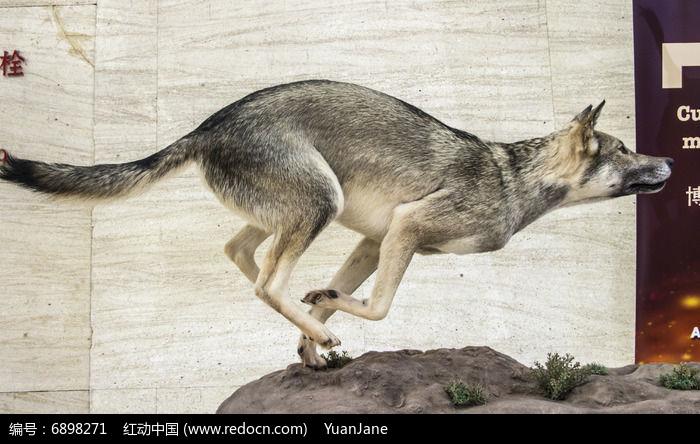 奔跑 动物gif