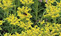 美丽的黄花背景图片